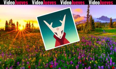fern flower videojueves